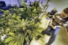 The Positive Cannabis Scene in Colorado is Mind Blowing (Video)
