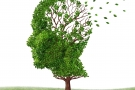 Alzheimer Hope: Possible to Restore Lost Memories (Study)