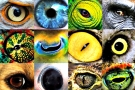 How Animals See The World (Video)
