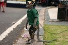 Monkey Business – Jobs for Primates (Video)