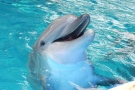 This Happy Dolphin Loves Watching Gymnastics (Video)