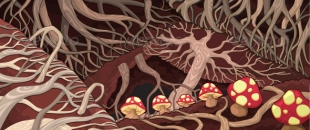Mushroom Networks and the Language of Nature – Paul Stamets (Video)