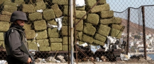 Legal Cannabis Cutting Profits of the DEA and Mexican Cartels