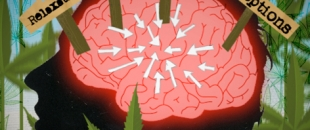 Scientists Map The Cannabinoid Receptors in The Human Brain (Video)