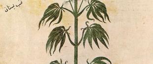 Trail Blazing – Cannabis Footprints Around the World (Map)
