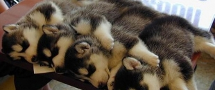 The Healing Power of Cuddling (Study)