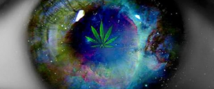 Cannabis Prevents Loss of Vision, Blindness (Study)