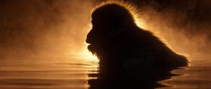 Animals Illuminated by Sunset (Photo Gallery)