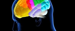 Cigarette Smoking Thins the Cortex of the Brain (Study)