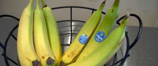 Separate Bananas to Slow Down Their Ripening – Food Hack