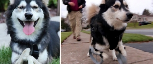 Disabled Dog Experiences First Run with 3D Printed Legs (Video)