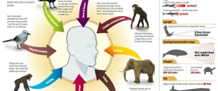 The Differences Between Humans And Other Animals (Infographic)