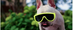 Funny Animals Wearing Glasses Photo Gallery