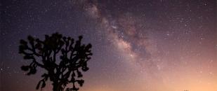 Joshua Tree Under the Milky Way Galaxy, Time Lapse (Video)