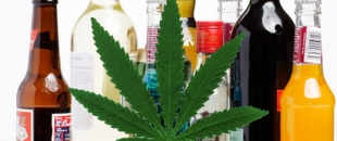 Cannabis Prevents Brain Damage Caused by Binge Drinking (Study)