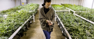 The Exponential Highs of Marijuana Reform