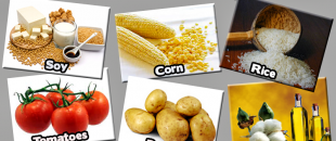 GMO Foods to Avoid – Say No to Monsanto!
