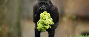 Amazing Animal Journalism Photos Collection 2011 (Gallery)
